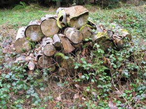 Tas de bois - gite pour la faune